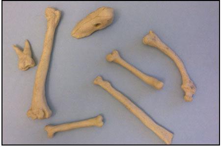 plasticene-bones-2
