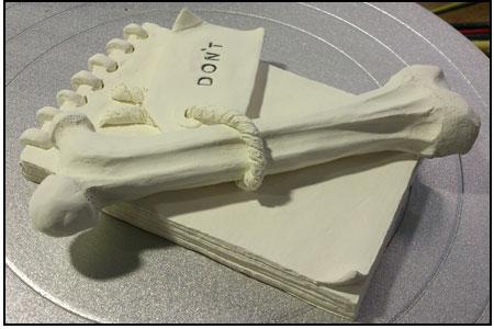 bone_notebook